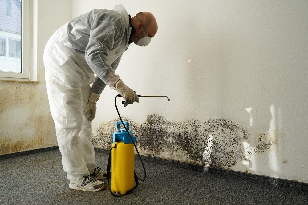 Cleaning-mold-in-the-house.jpg